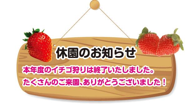 イチゴ狩り休園のお知らせ