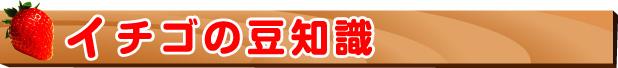 八千代市イチゴ狩り-イチゴの豆知識