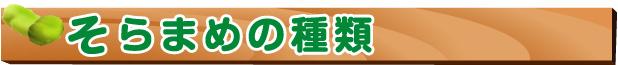 空豆-空豆の種類